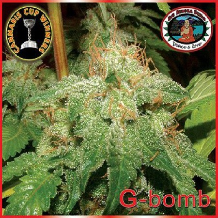 Big Buddha Seeds G-Bomb Feminized