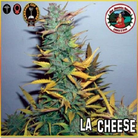 Big Buddha Seeds L.A. Cheese Feminized