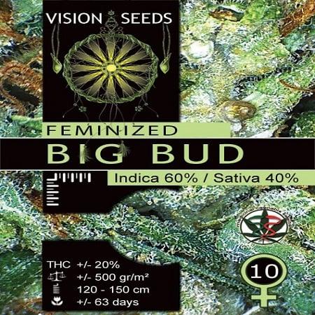Vision Seeds Big Bud Feminised