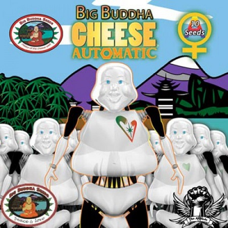 Big Buddha Seeds Cheese Automatic Feminised