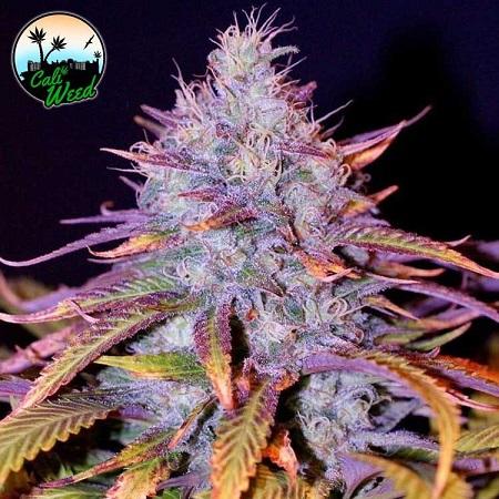 Blue Dream - Feminized - Cali Weed