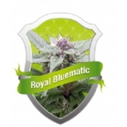 Royal Queen Seeds Royal Bluematic Feminised (PICK.N.MIX)