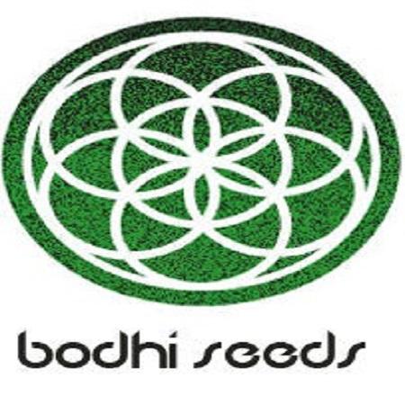 Bodhi Seeds Moontang Regular