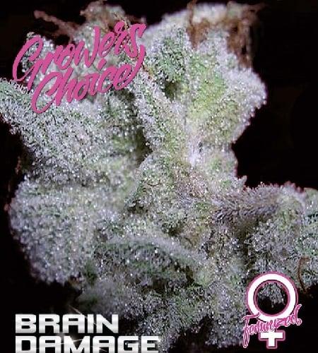 Brain Damage - Feminized - Growers Choice