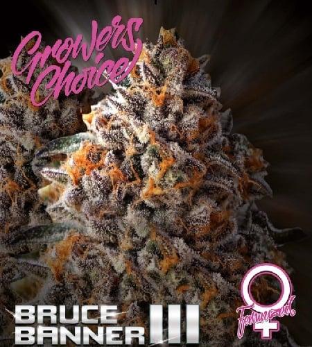 Bruce Banner III - Feminized - Growers Choice