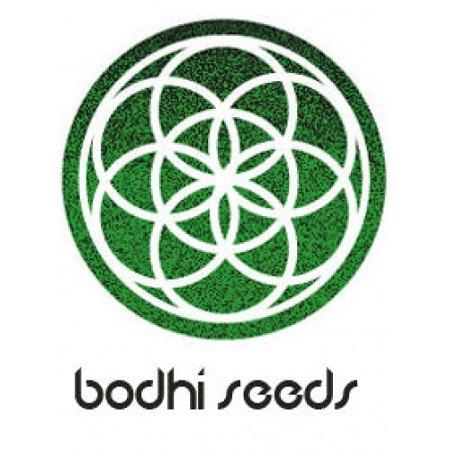 Bodhi Seeds Strange Brew Regular