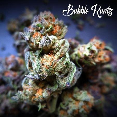 Bubblegum Runtz - Feminized - Tastebudz