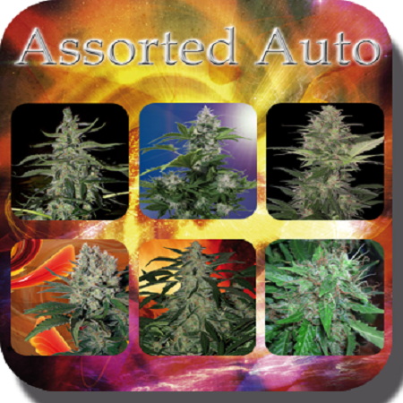 Buddha Seeds Assorted Auto Mix Feminized
