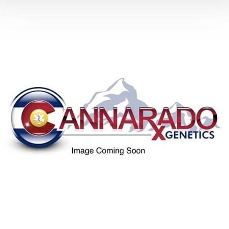 Floss Sugar - Feminized - Cannarado Genetics