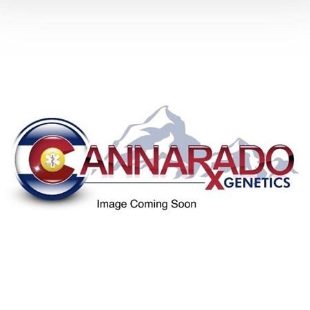 Gushcanna - Feminized - Cannarado Genetics