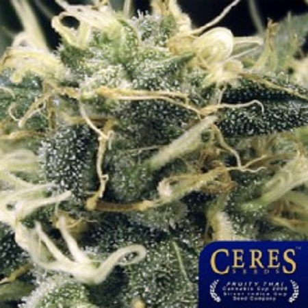 Ceres Seeds Fruity Thai Regular