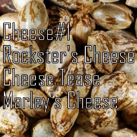 Kaliman Seeds Cheese Quattro Regular