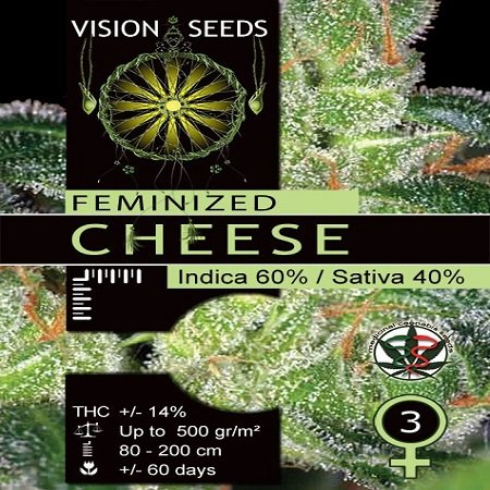 Vision Seeds Cheese Feminsed