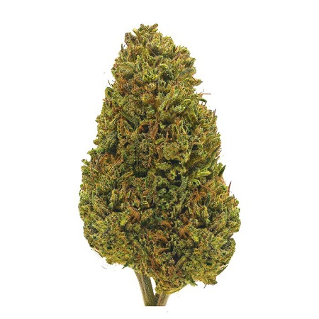 Cherry Wine Regular Cannabis Seeds by Hemp CBD Seeds