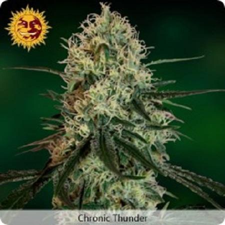 Barney's Farm Seeds Chronic Thunder Feminized