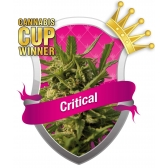 Royal Queen Seeds Critical Feminized (PICK.N.MIX)