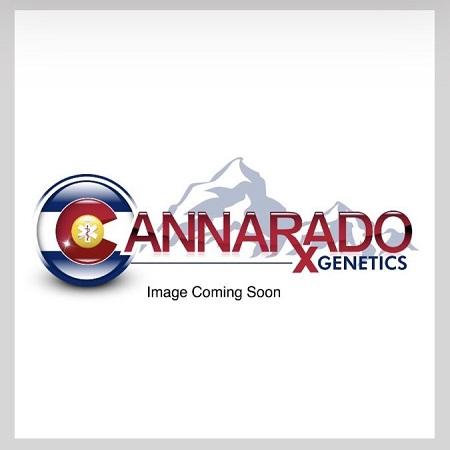 Papusas - Feminized - Cannarado Genetics