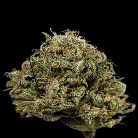 Dinafem Seeds Cheese XXL Auto Feminised PICK N MIX