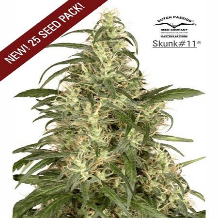 Dutch Passion Seeds Skunk #11 Feminized