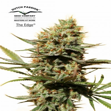 Dutch Passion Seeds The Edge Feminized