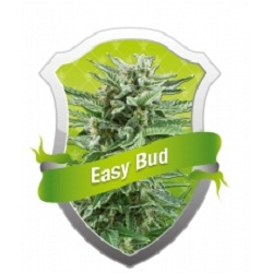Royal Queen Seeds Easy Bud Feminized (PICK.N.MIX)