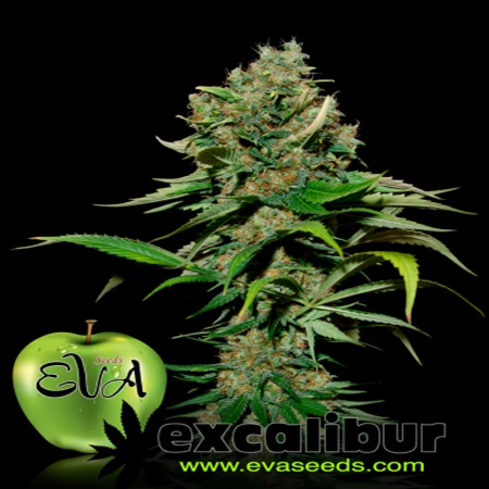 Eva Seeds Excalibur Feminized