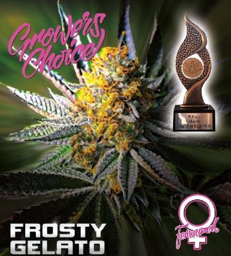 Frosty Gelato - Feminized - Growers Choice