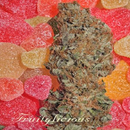 Mandala Seeds Fruitylicous Feminized