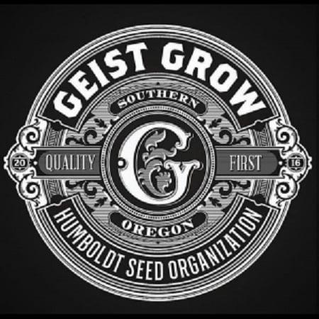 31 Ghosts - Regular - Geist Grow