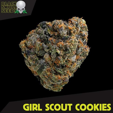 Black Skull Seeds Girl Scout Cookies Feminized