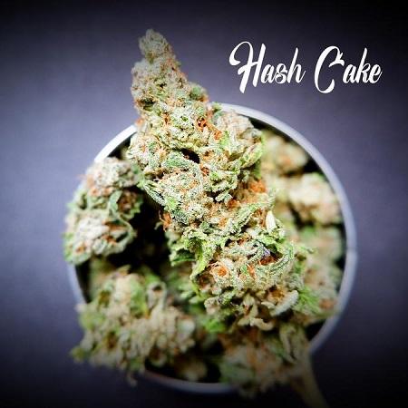 Hash Cake - Feminized - Tastebudz