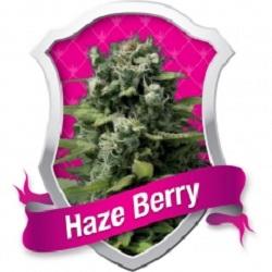 Royal Queen Seeds Haze Berry Feminized (PICK N MIX)