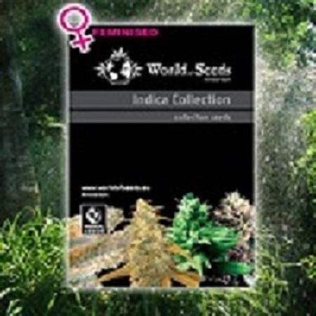 World of Seeds Landrace Indica Collection Feminized