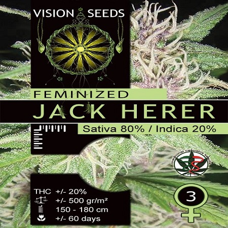 Vision Seeds Jack Herer Feminized