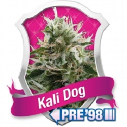 Royal Queen Seeds Kali Dog Feminized (PICK N MIX)