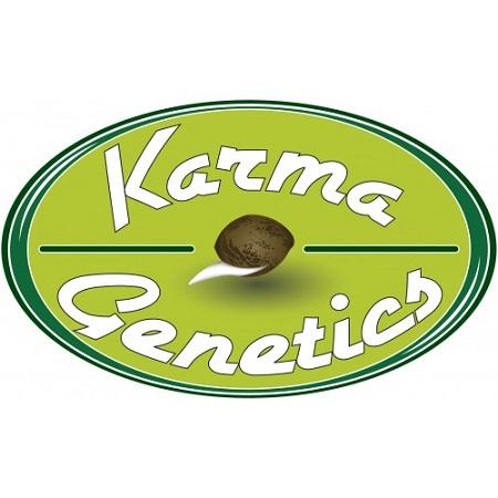 Karma Genetics Seeds White Biker Regular