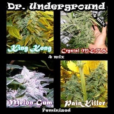 Dr Underground Seeds Killer Mix Feminized