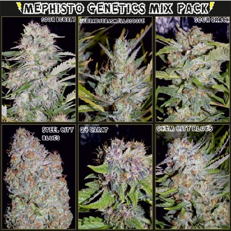 Mephisto Genetics Seeds Elite Mix Auto Feminised