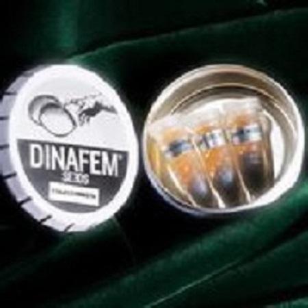 Dinafem Seeds Dinafem Mix #3 Auto Feminized