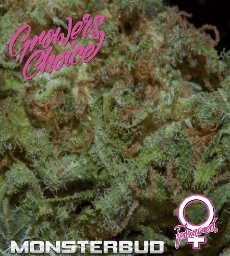 Monsterbud - Feminized - Growers Choice