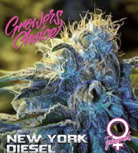 New York Diesel - Feminized - Growers Choice