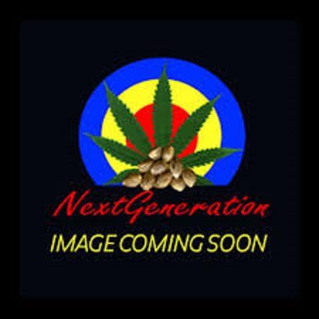 Next Generation Seeds Timewarp Diesel Regular