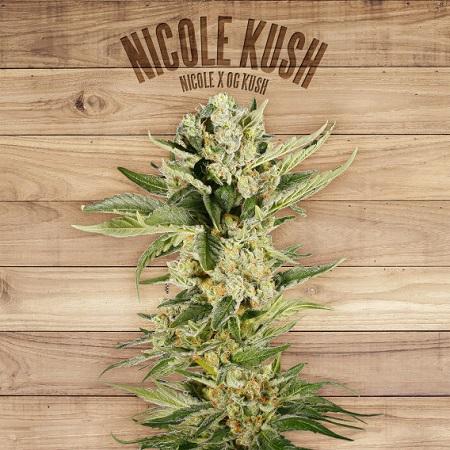 The Plant Organic Seeds Nicole Kush Feminized
