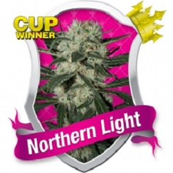 Royal Queen Seeds Northern Light Feminized (PICK N MIX)