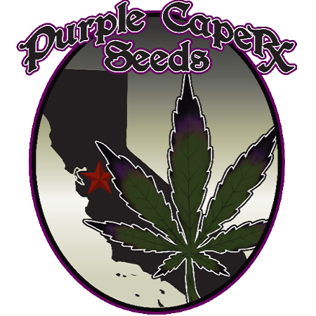 Purple Caper Seeds Zkittlez BX Regular