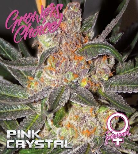 Pink Crystal - Feminized - Growers Choice