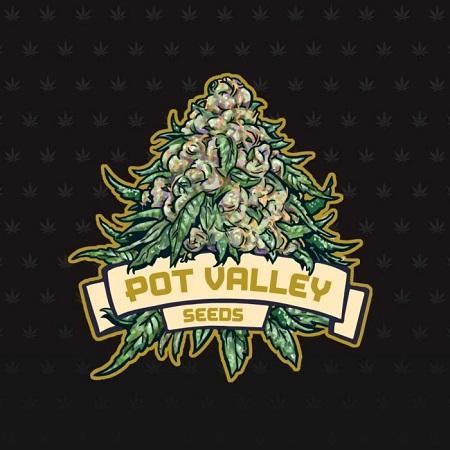 Strawberry Marshmallow Reverse - Feminized - Pot Valley Seeds