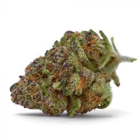 Purple Sunset - Feminized - Growers Choice