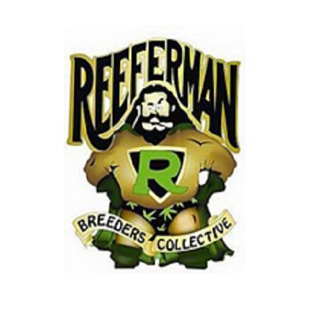 Reeferman Seeds Night Nurse Regular