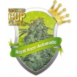 Royal Queen Royal Haze Automatic Feminized (PICK.N.MIX)